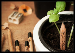Plant your Pencil- Basil image thanks to www.foodiggity.com