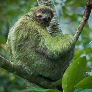 blog_sloth_camo